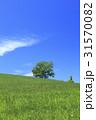 美瑛 北海道 美瑛の丘の写真 31570082