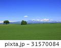 北海道 美瑛町 残雪の大雪山と広大な麦畑 31570084