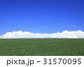 北海道 美瑛町 麦畑と積雲 31570095