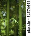 木 竹 植物の写真 31570643