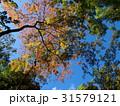 色付き始めた秋色 31579121
