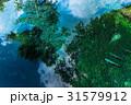 忍野八海 池 水面の写真 31579912