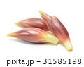 ミョウガ 31585198