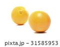 ネーブルオレンジ 31585953