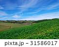 上富良野 農地 畑の写真 31586017