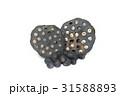 Black lotus seed on white background 31588893