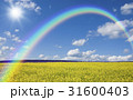 黄色い花咲く丘と雲と虹と太陽 31600403