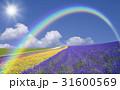 ラベンダー畑と雲と虹と太陽 31600569