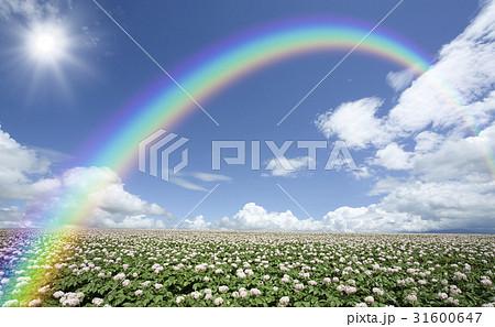 ジャガイモ畑のジャガイモの花と雲と虹と太陽 31600647