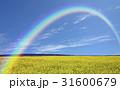 黄色い花咲く丘と雲と虹 31600679
