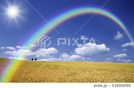麦畑と木と雲と虹と太陽 31600696