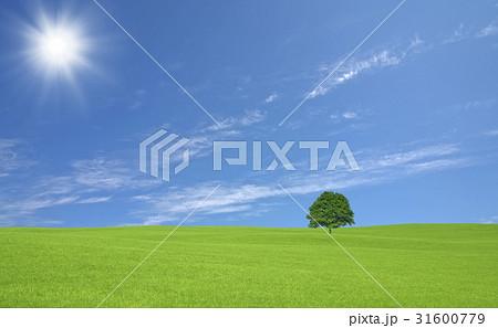 草原の一本木と雲と太陽 31600779