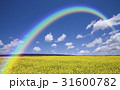 黄色い花咲く丘と雲と虹 31600782