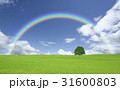 草原の一本木と雲と虹 31600803