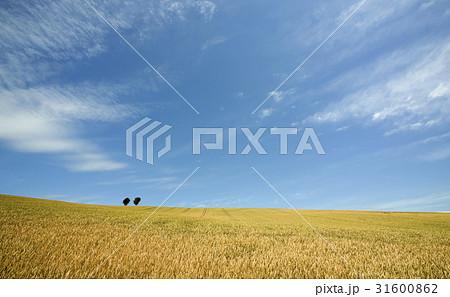 麦畑と木と雲 31600862