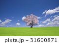 草原の桜の木と雲 31600871
