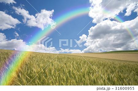 麦畑と雲と虹 31600955