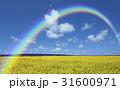 黄色い花咲く丘と雲と虹 31600971