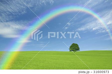 草原の一本木と雲と虹 31600973