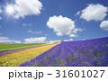 ラベンダー畑と雲と太陽 31601027