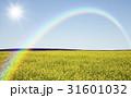 黄色い花咲く丘と雲と虹と太陽 31601032