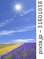 ラベンダー畑と太陽 31601038