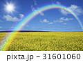 黄色い花咲く丘と雲と虹と太陽 31601060