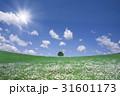 草原に咲く白い花と1本木 31601173