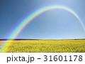 黄色い花咲く丘と雲と虹 31601178