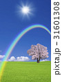 草原の桜の木と雲と虹 31601308