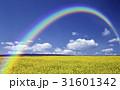 黄色い花咲く丘と雲と虹 31601342