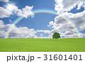 草原の一本木と雲と太陽と虹 31601401