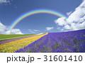 ラベンダー畑と雲と虹 31601410