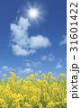菜の花と太陽 31601422
