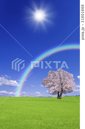草原の桜の木と雲と虹 31601666