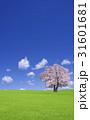 草原の桜の木と雲 31601681