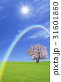 草原の桜の木と雲と虹 31601860