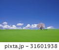 丘とサクラの木 31601938