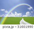 丘へ続く白い道と虹 31601990