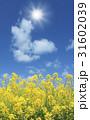 菜の花と太陽 31602039