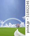 サクラの木と白い道と虹 31602246