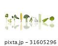野菜 31605296