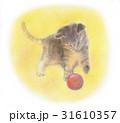 ボールで遊ぶ子猫 31610357