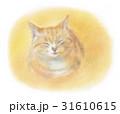 猫 子猫 眠るのイラスト 31610615