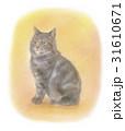 アメショー ペット 子猫のイラスト 31610671