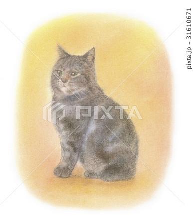 アメショー系の子猫 31610671