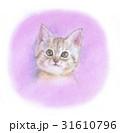 ほわほわの子猫 31610796