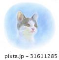 子猫 31611285