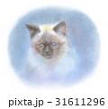ヒマラヤンの子猫 31611296