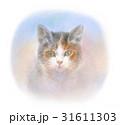 見つめる三毛猫 31611303